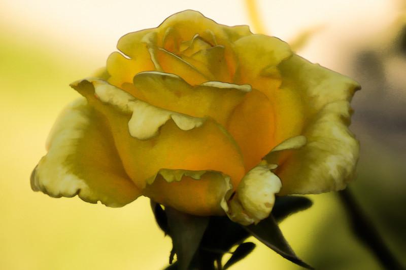 aug 7m- flower.jpg