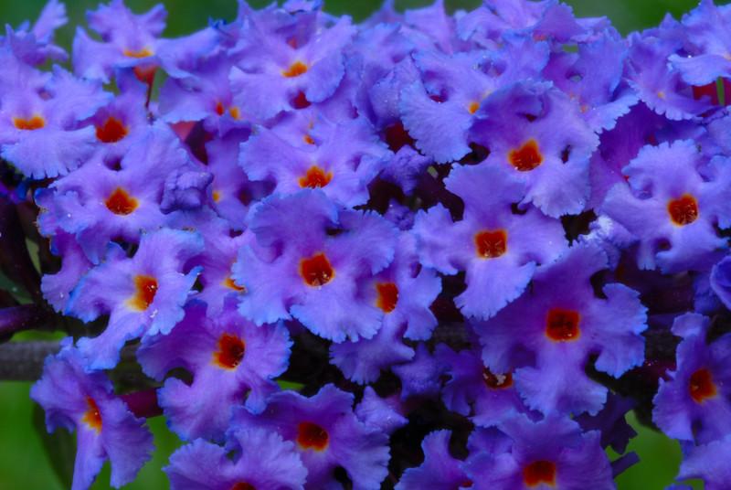 Butterfly Blooms.jpg