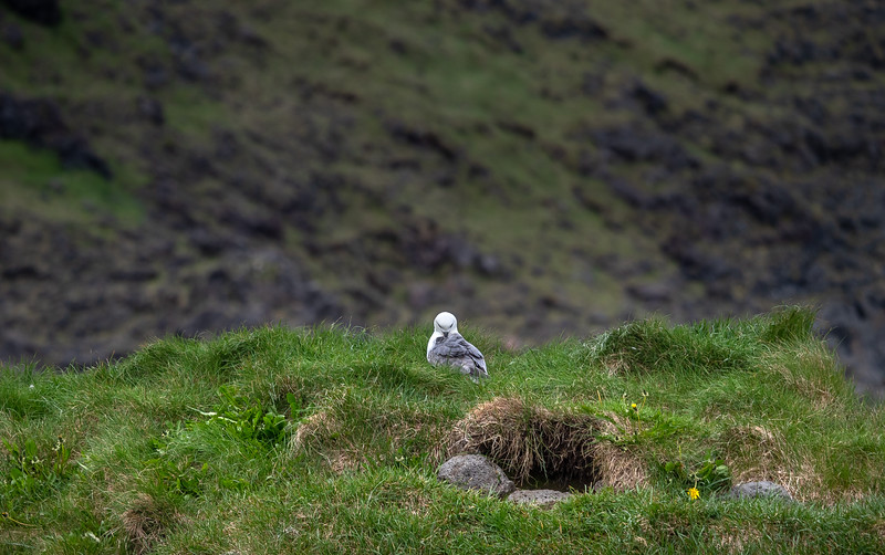 Bird in Iceland  Photgraphy by Wayne Heim