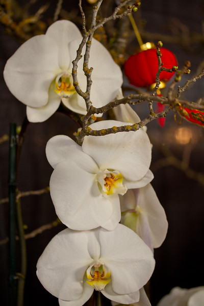 SF_Orchid_Show-09.jpg
