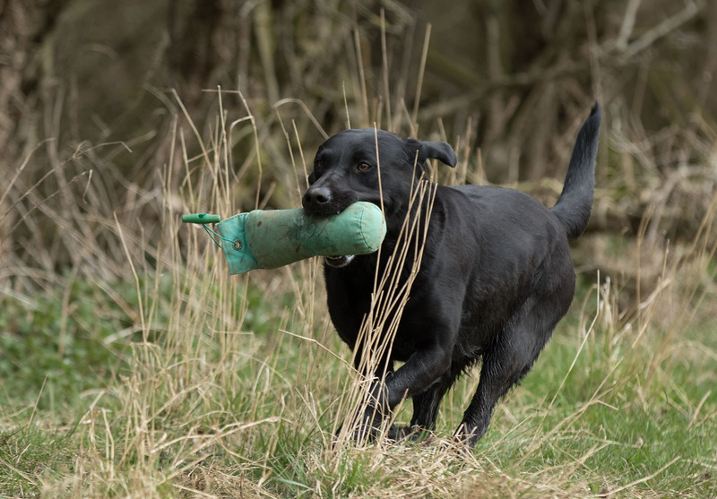 Dogs-5292.jpg