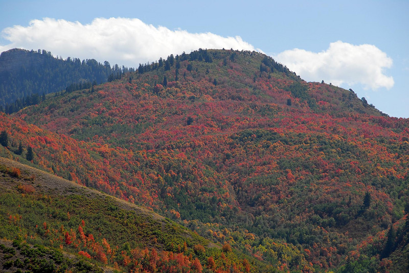 9/18/07 – The fall colors are a little disappointing this year. There are a few trees with some good color but most are a little dull. They say the dry hot summer is the reason why.