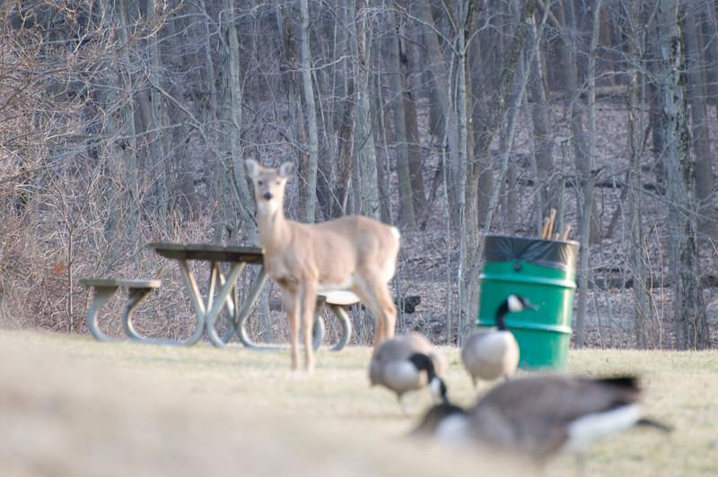 Wildlife at Eagle Creek Park