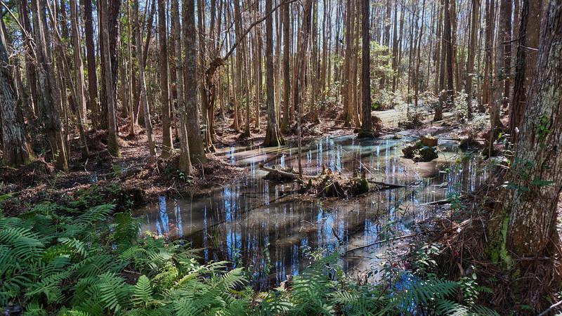 NE FLORIDA Osceola rainbow swamp.jpg