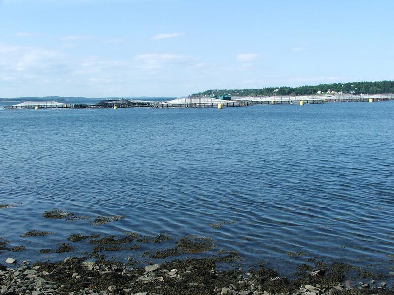 Maine 2007 075.JPG