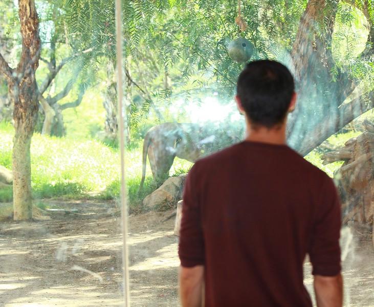 San Diego wild animal pakr 201700070.jpg