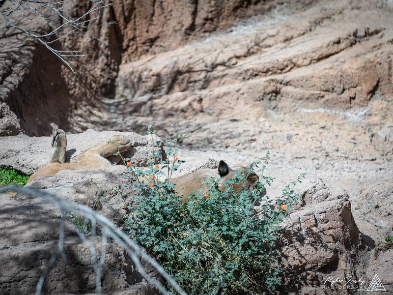 Arizona-Sonora Desert Museum-003.jpg
