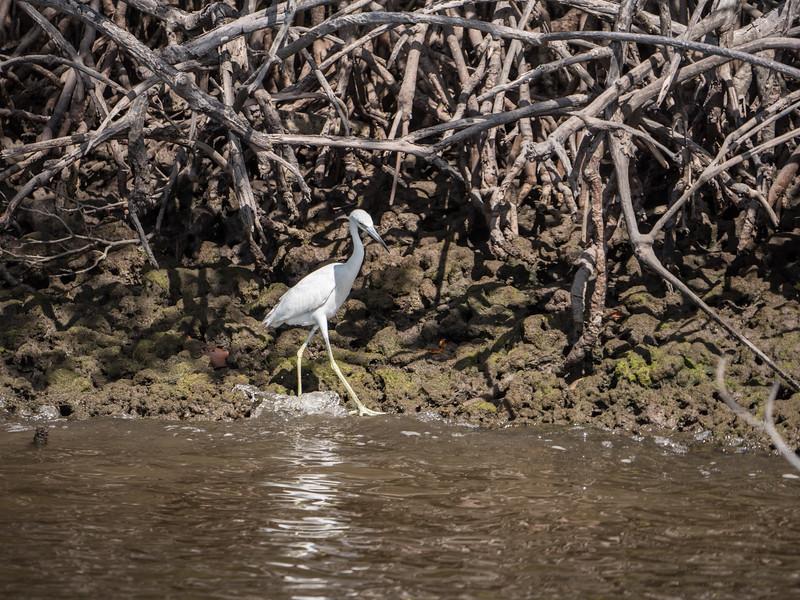 Everglades-16.jpg