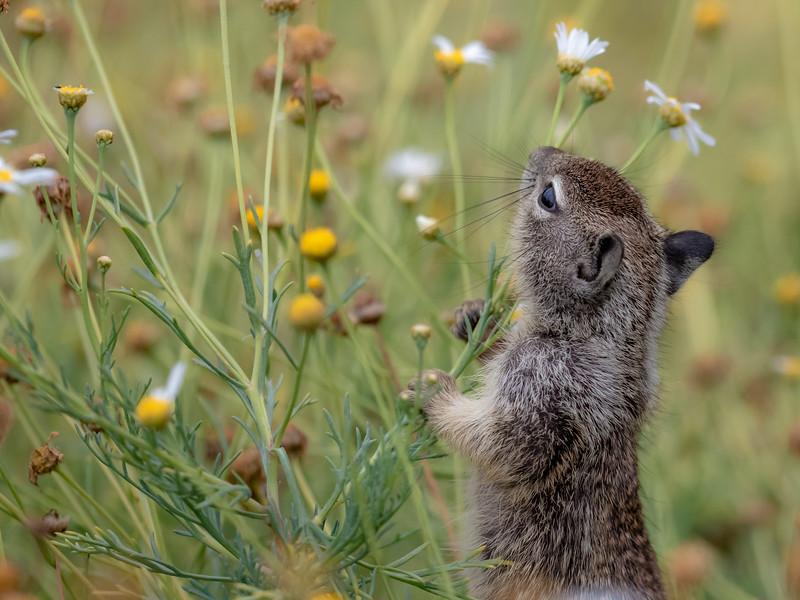 squirel in flowers.jpg