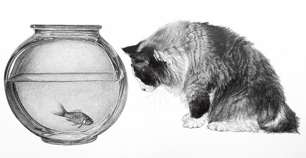 """""""The Fish Bowl"""" (pencil) by Carol Foerster"""