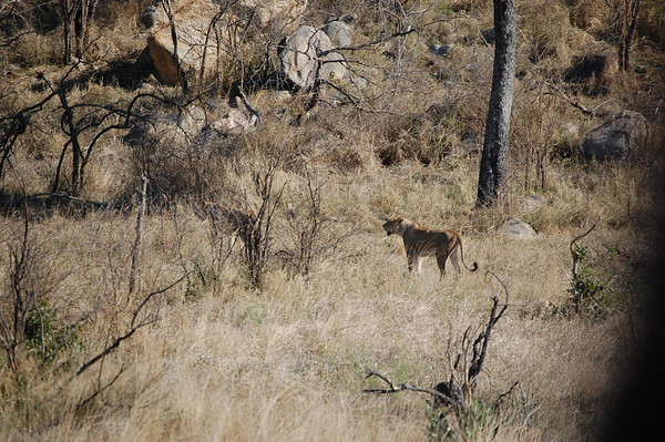 Kruger - Day 2 - Oct 14, 2011