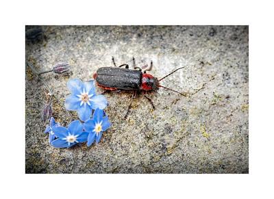 Wildlife:  Beetles