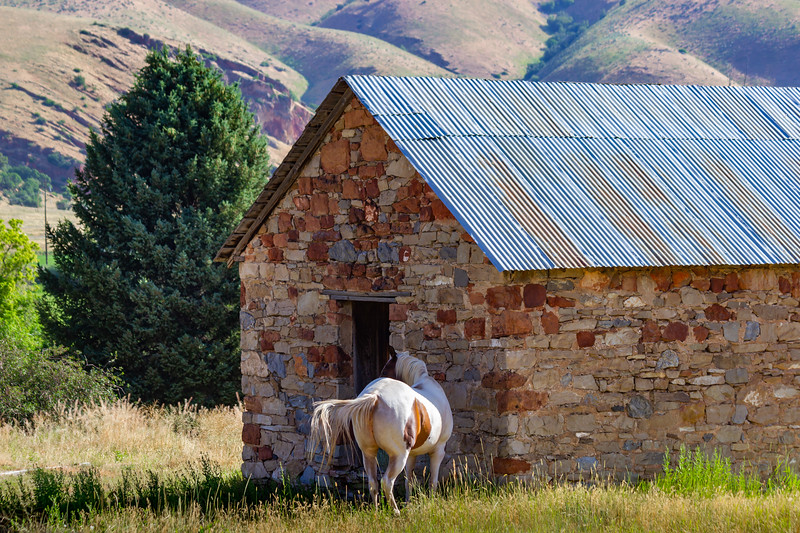 Horse Finding Shade By Old Building