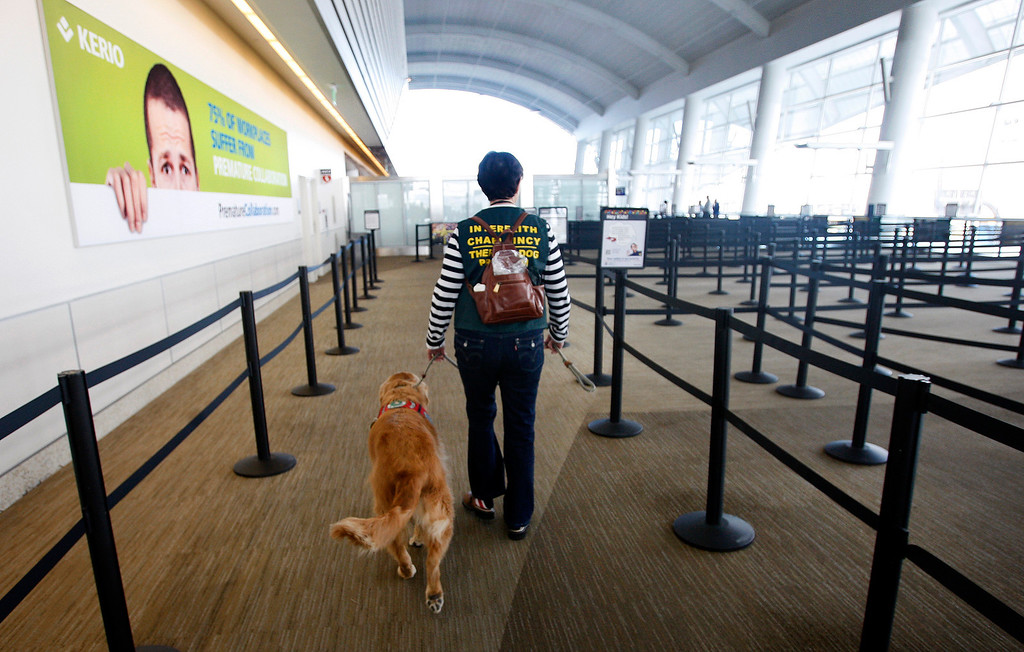 """. Kyra Hubis walks her \""""therapy dog\"""" Henry James up to the security area at Mineta San Jose International Airport in San Jose, Calif. on Monday, Jan. 28, 2013. Henry James is one of eleven dogs used by the airport\'s interfaith chaplaincy to help passengers who are dealing with grief, stress, or need emotional support at the airport. (Karl Mondon/Staff)"""