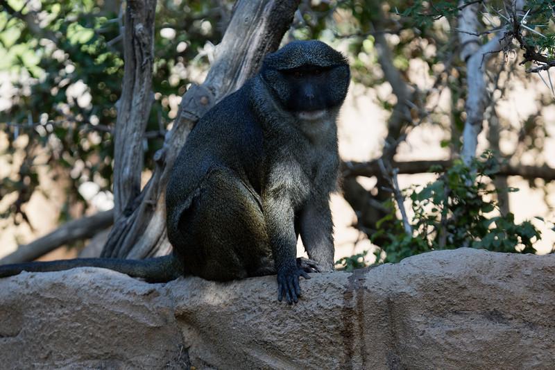 San Diego Zoo, September 22-23, 2017