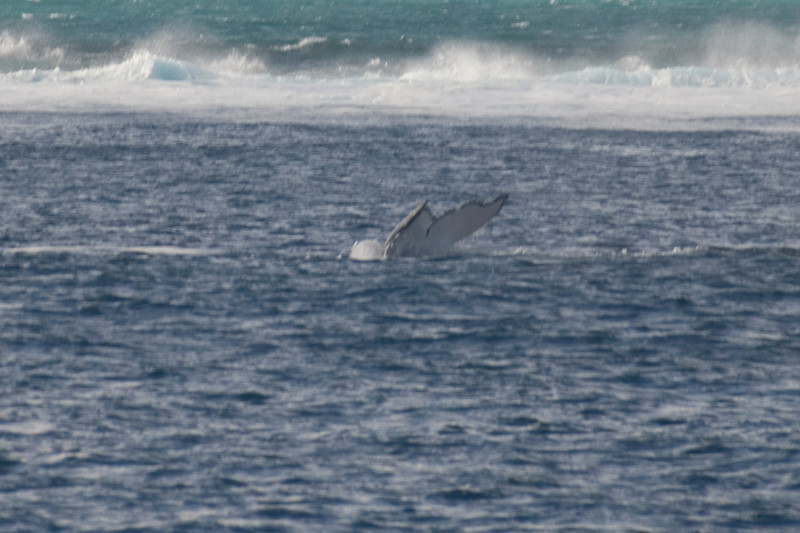 Whale Tail 5 - Exmouth, Western Australia