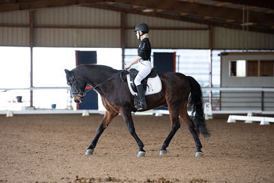 Horse 115