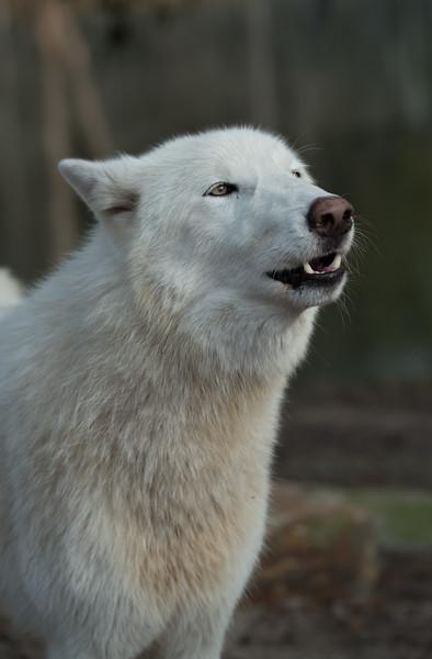 Seacrest Wolves_-67.jpg