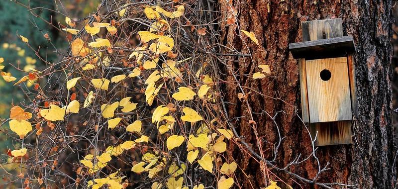 Fall Colors at Granite Basin Lake