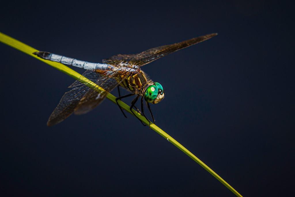 小蜻蜓,静静享受