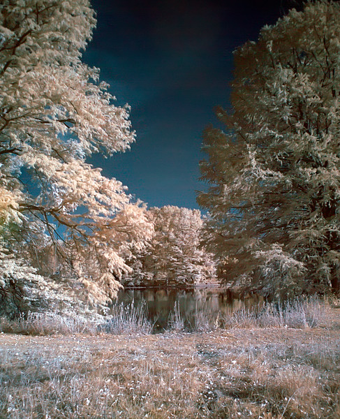 01 Shaw's Nature Reserve Nov 2007 Infrared from RAW 1.jpg