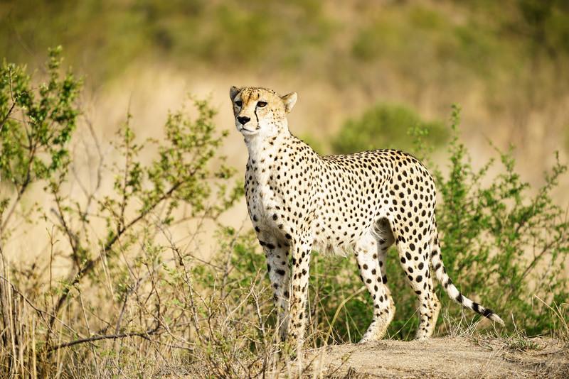 LeopardHills-20171022-0251.jpg