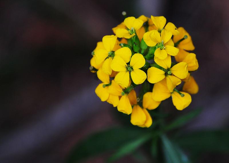 NEA_3024-7x5-Flower-adj.jpg