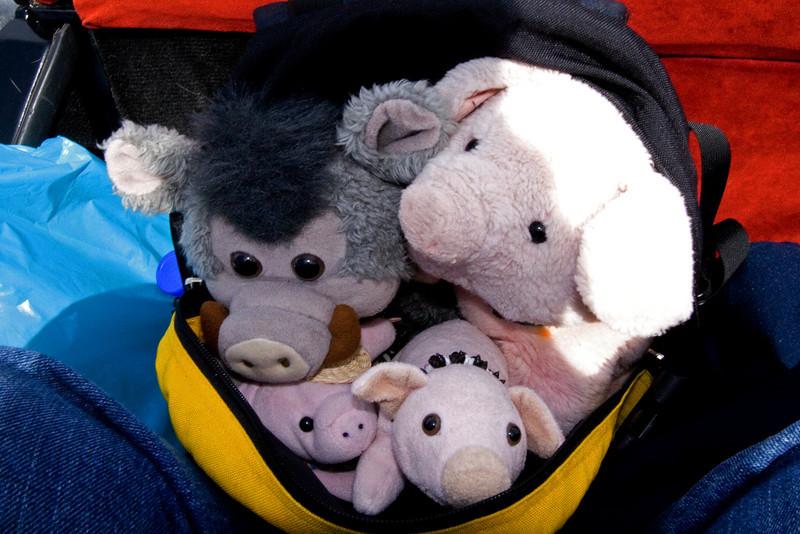 Gang in the Backpack.jpg