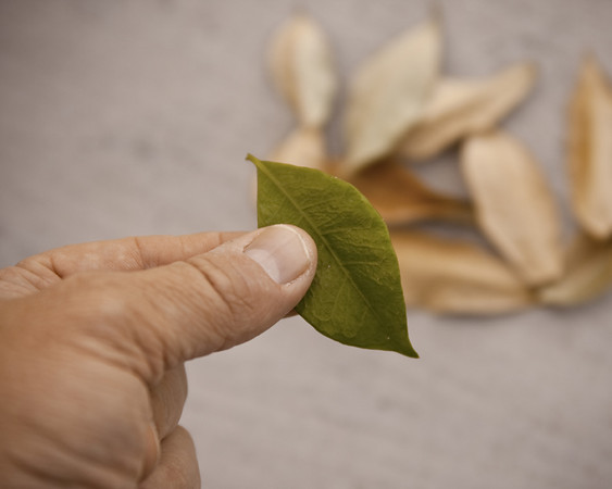 Turning Over A New Leaf 365-209 8x10 72.jpg