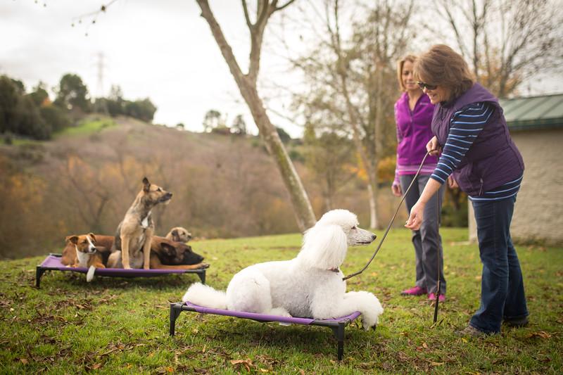 Dog Photos-Edited-67.jpg