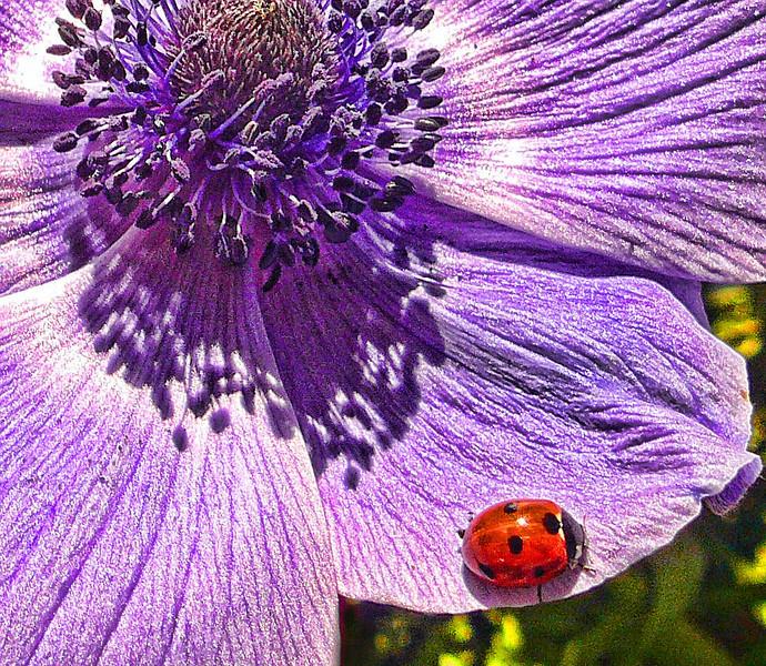 ladybug art.jpg