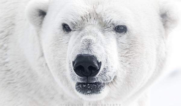 Wildlife winter 2015
