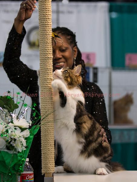 CatShow2014043_1.jpg