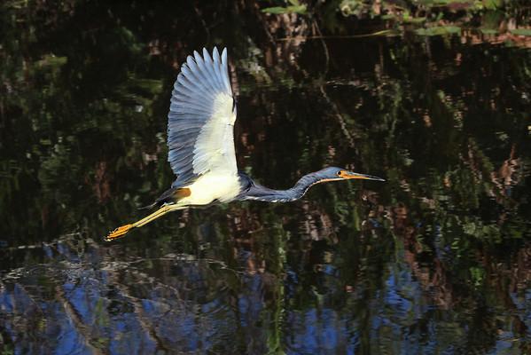 Everglades Test Canon 5D Mark II