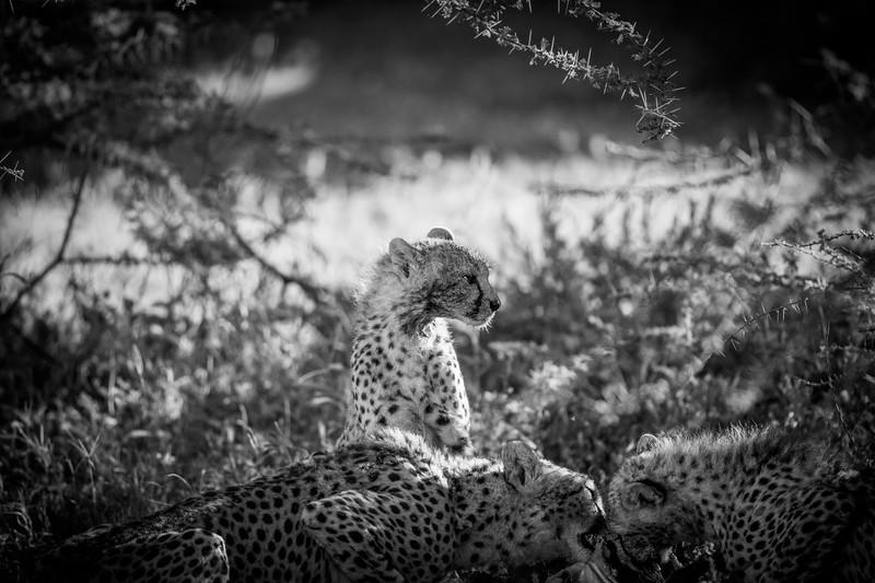 Tanzania_Feb_2018-177.jpg