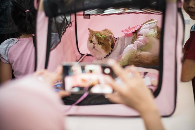 VividSnaps-The-Seletar-Mall-CAT-Dress-Up-Contest-078.jpg