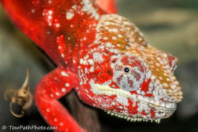 Zoo - Reptile