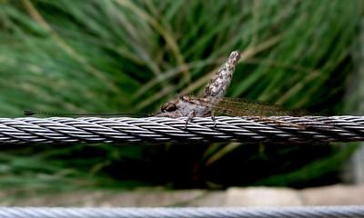 Lacewings, owlflies, etc.