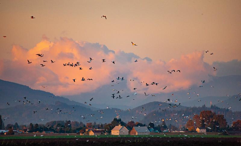 Fall geese2-0949.jpg