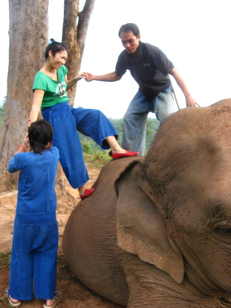 One of three ways to mount an elephant