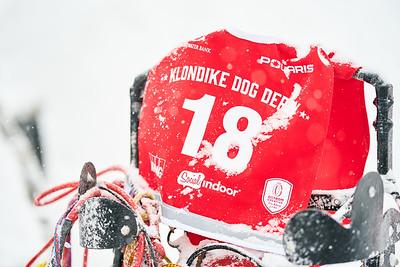 Klondike Dog Sled Race 2-9-2020