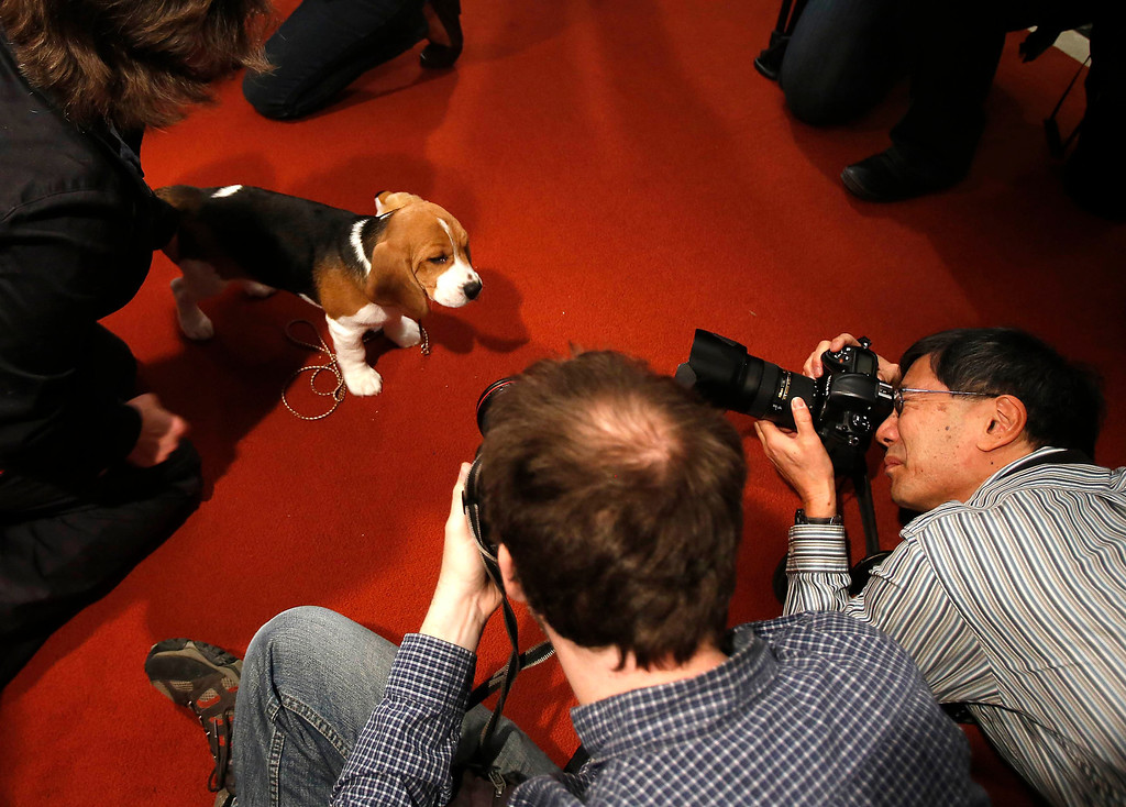 . Shiloh meets the press. The Beagle is No. 4 on the list. (REUTERS/Carlo Allegri)