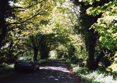 Dorset country road