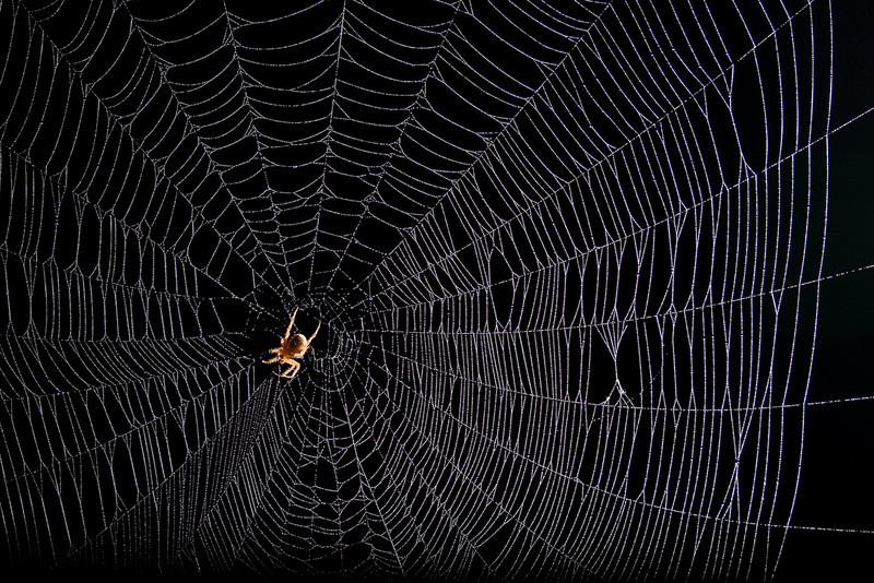 Spiderman-86.jpg