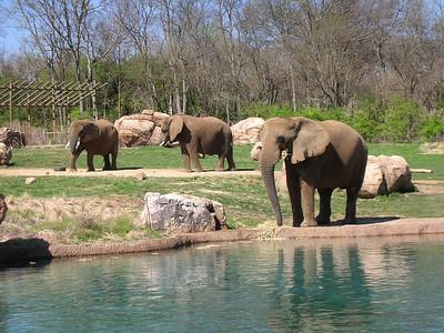 Nashville Zoo - Spring 2006