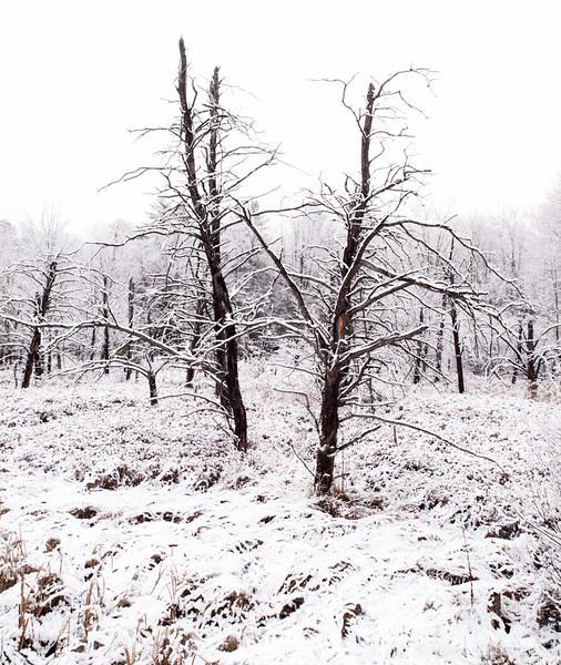First Snow-15.jpg