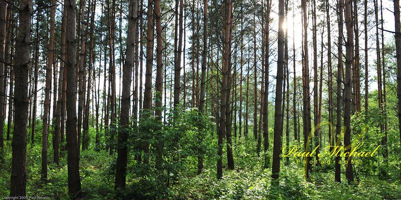 Miskas.  Forest.