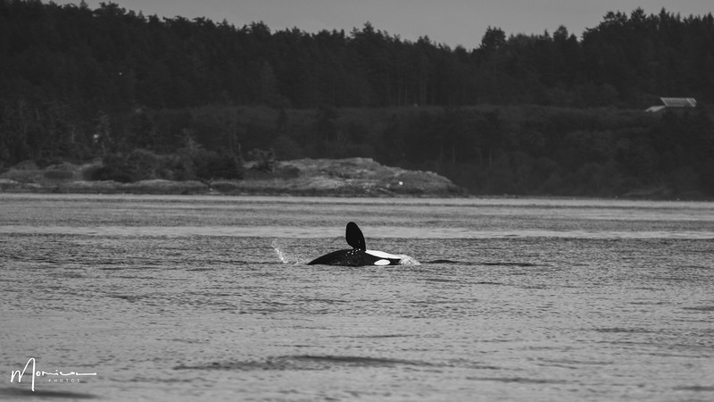 2019-08-31 - Whale Watching-2467_edit.jpg