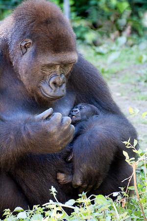 Animals: Parenting 1