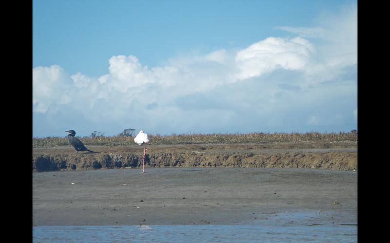 Monterey-36.jpeg